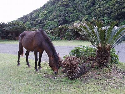 都井岬 馬 画像