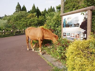 都井岬ビジターセンターうまの館