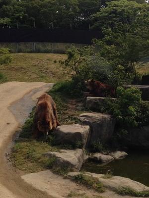 アドベンチャーワールド 熊